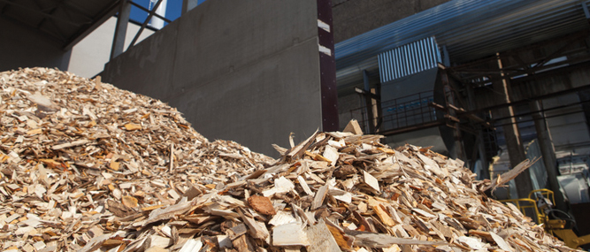Biomass Rules in Flux
